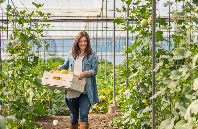 Happy adult woman in casual clothes looking down and carrying wooden crate with yellow melon while going along hothouse during daytime on blurred background