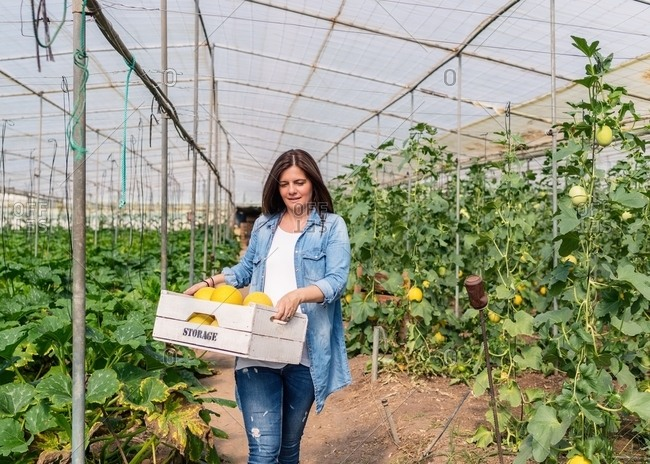 Smiling farmer carrying crate with crop in greenhouse