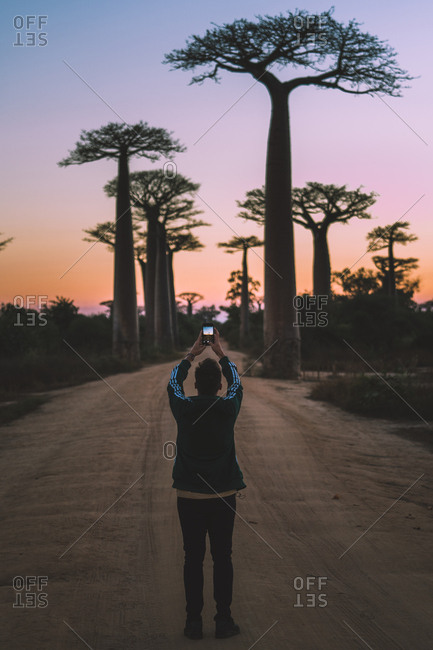 Madagascar - JULY 6, 2019: From behind modern man in casual outfit taking picture on smartphone while standing at rural road by tall baobab trees in twilight
