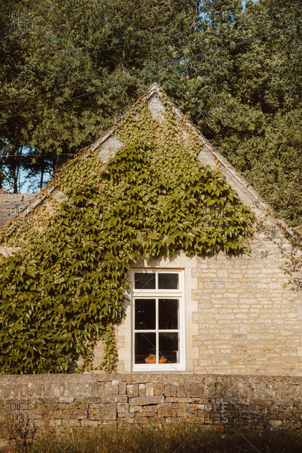 Cozy stone house covered with ivy plant in village Castle Combe of Dorset on sunny day