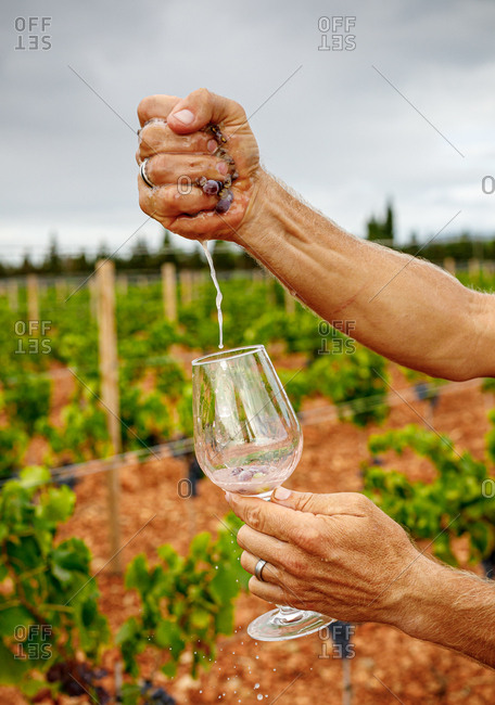 Crop man squeezing ripe grape in glass at vineyard on blurred background