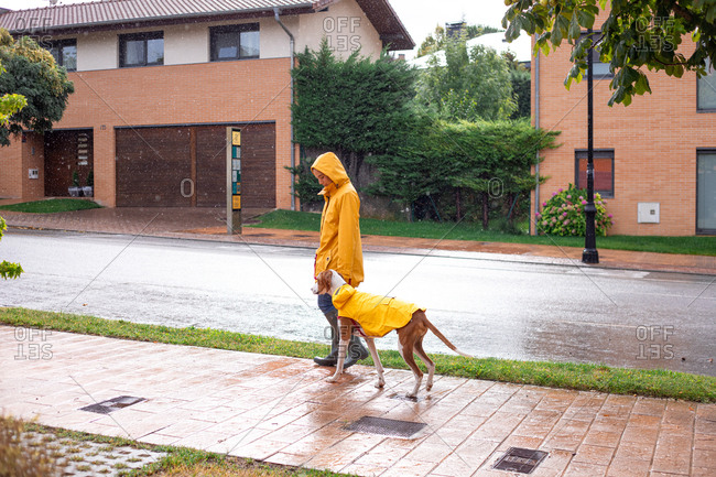 Side view of active woman in yellow jacket with hood and rubber boots walking with English Pointer in yellow cloak on leash in rainy day in street