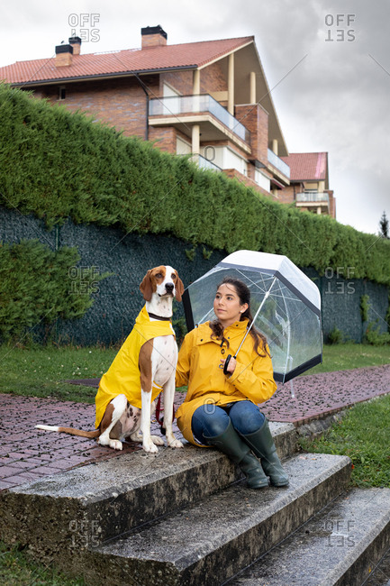 Calm English Pointer in yellow cloak and woman in yellow raincoat with umbrella sitting together at stone stairs nearby plant fence in rainy weather