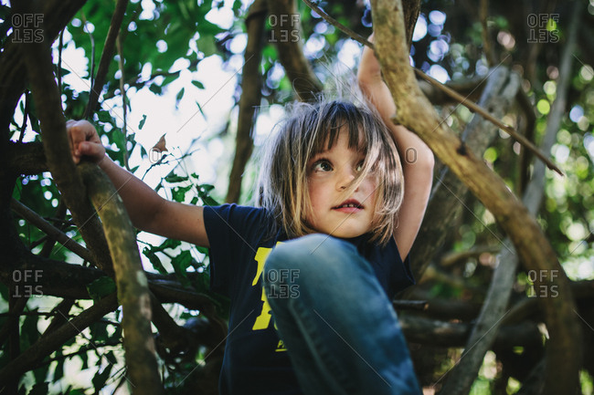A child sits in a tree looking up