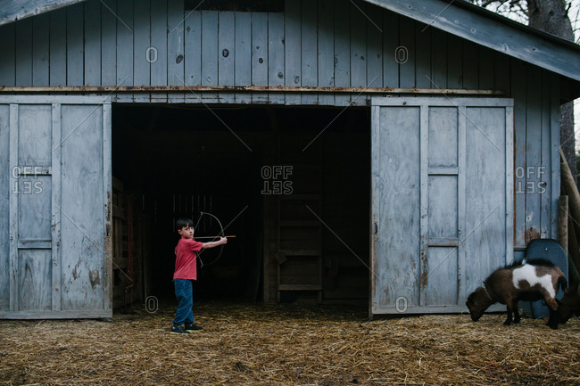 A holds back a bow and points an arrow at a goat while looking at the camera