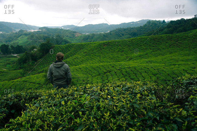 Hiker in the tea plantations in the Cameron Highlands, Malaysia.