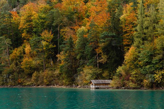 wooden pier near alpine lake on golden forest background