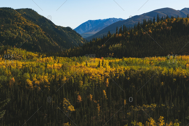 Peak foliage and mountains in Denali National Park in Alaska
