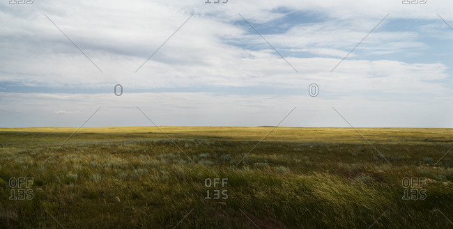 Prairie native grasslands in Alberta.