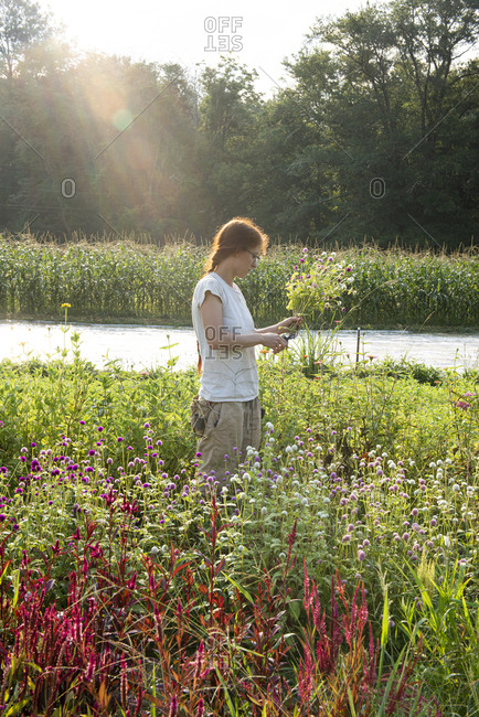Young female farmer with red hair cuts flowers in the field