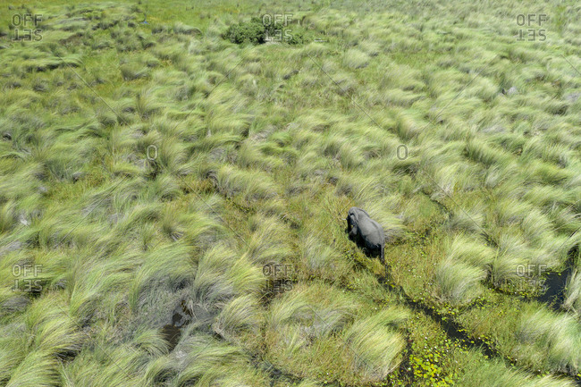View from the air of an elephant crossing a wetland