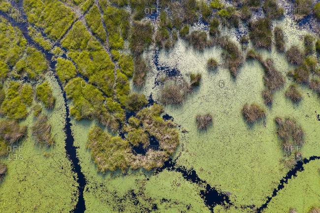 aerial view of a swamp of botswana