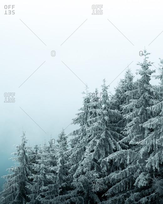 Frozen snowy Trees in Germany