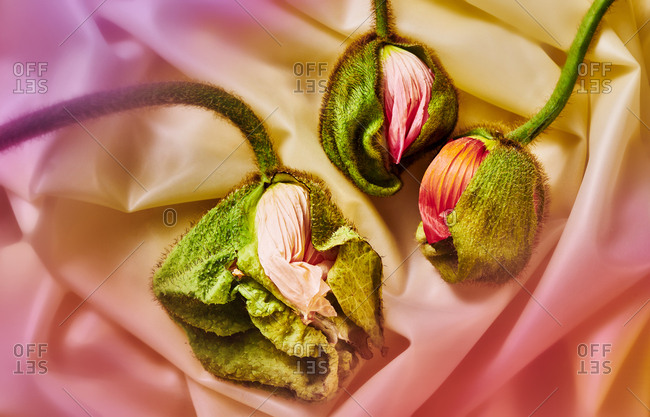 Wilted Flower Eclosions