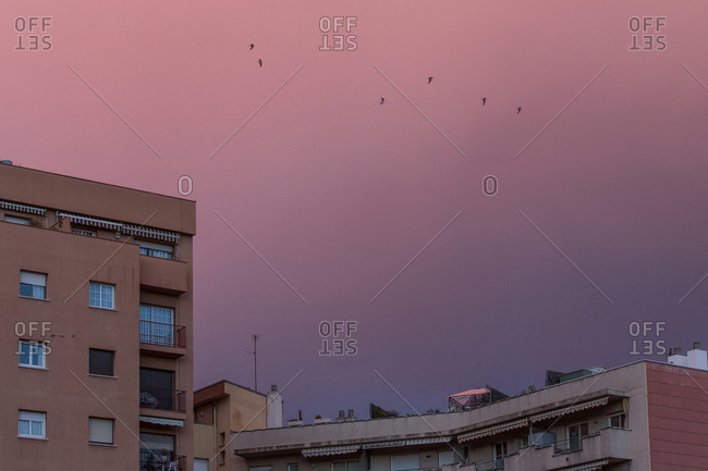 Birds flying in pink and purple sky over buildings