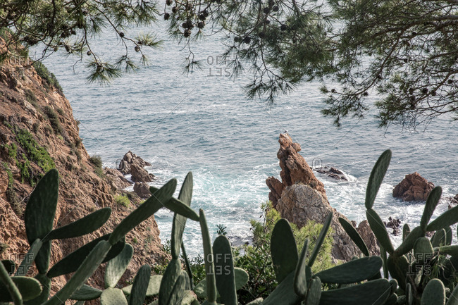 Cacti on the rocky coast of Costa Brava, Spain