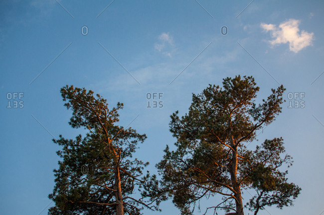 Treetops in Borjomi-Kharagauli National Park, Lesser Caucasus, Georgia