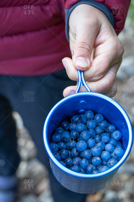 Girl's hand holds cup of wild blueberries