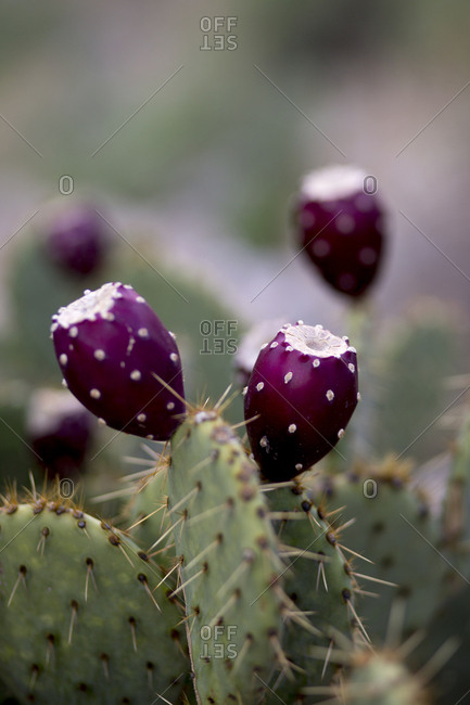 The desert mountains of Sabino Canyon in Tucson are full of flora and fauna.