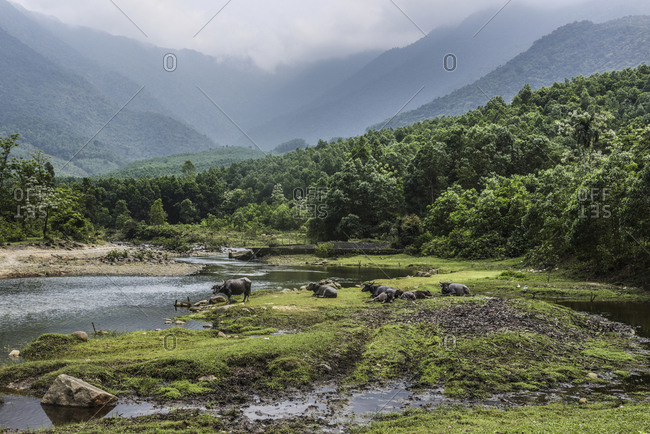 High angle view of buffaloes at lakeshore against mountains