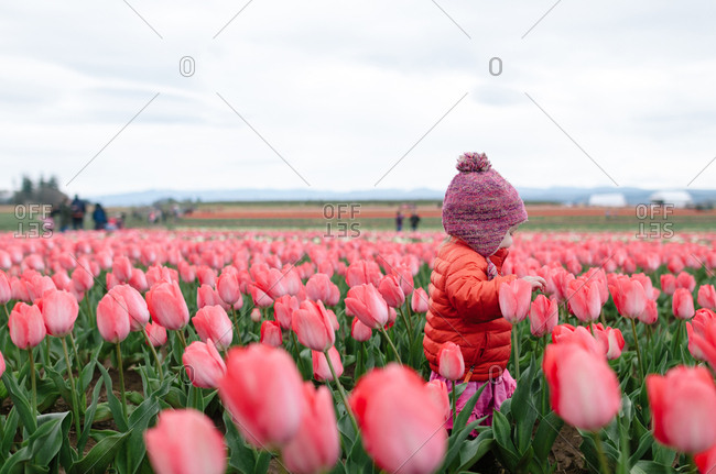 Side view of girl walking amidst tulips blooming in farm against sky