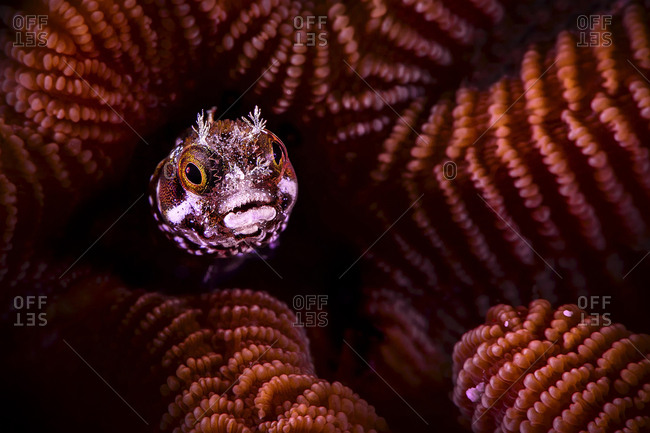 Close-up of fish swimming by coral undersea