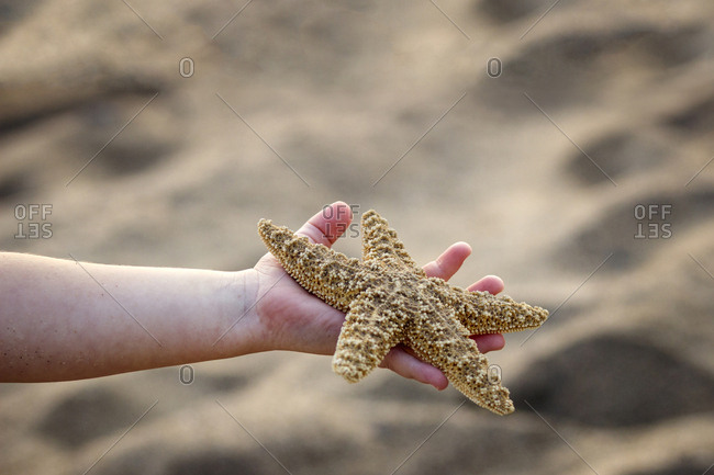 Cropped hand of girl holding starfish at beach