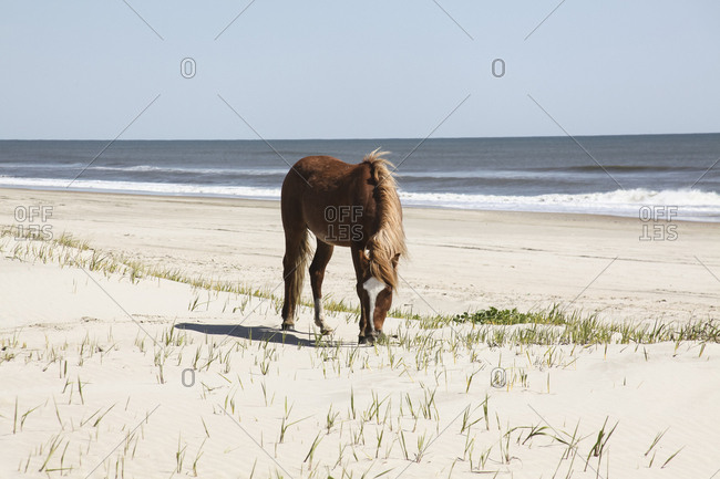 Horse standing at beach against clear sky during sunny day