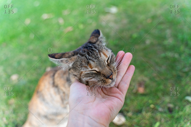 Woman hand petting a cute tabby cat outdoors on the grass