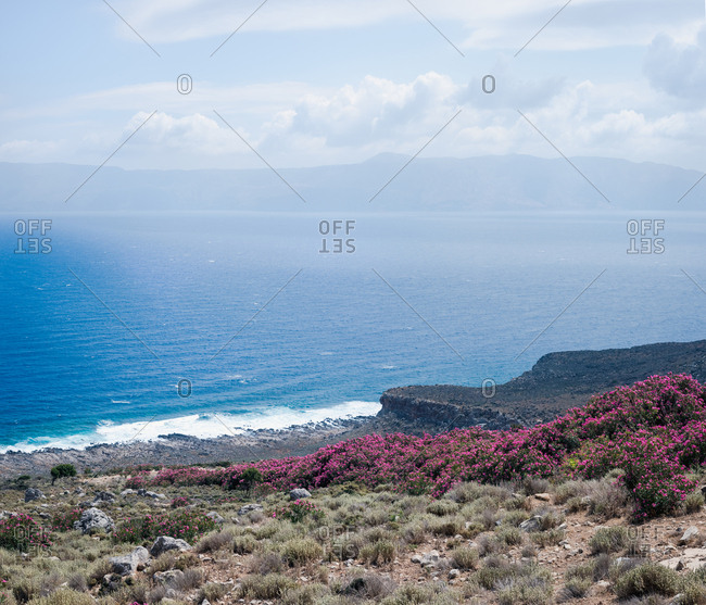 View on the sea shore with plants and flowers on the island of C