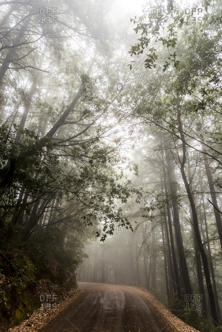 Dirt road leading through misty forest