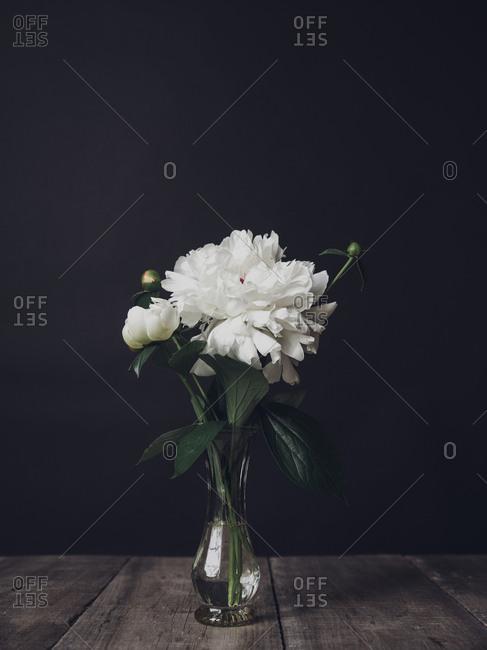 White flowers in vase on wooden table against black background