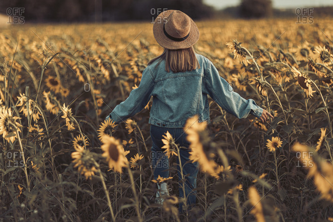 Rear view of young woman with hat and jeans jacket in a sunflowers field at sunset in Lleida