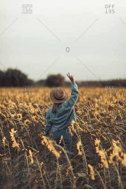 Rear view of young woman with hat and jeans jacket in a sunflowers field- making peace sign