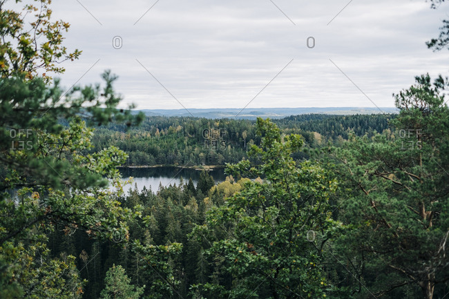 Tree tops in scandinavian countryside with lake