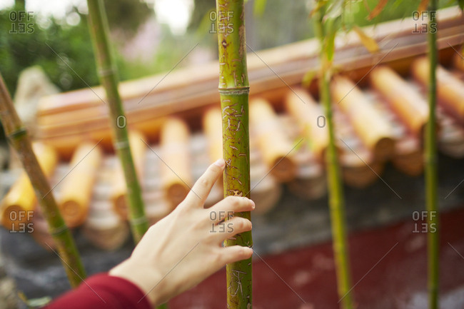 Hand touching bamboo with scratch marks