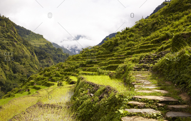 Green terraced mountain with natural stone steps in Nepal