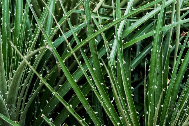 Close up of spiky green leaf blades.