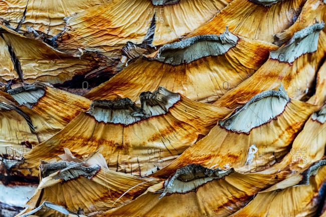 Close up of the bark of a palm tree.