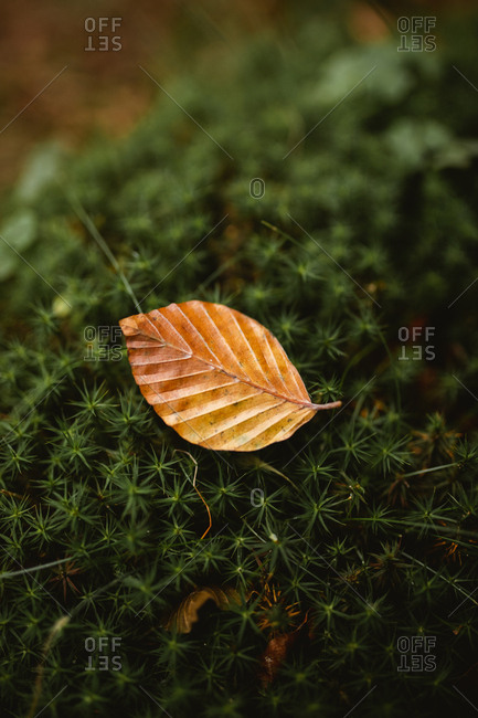 Fallen leave on top of green moss