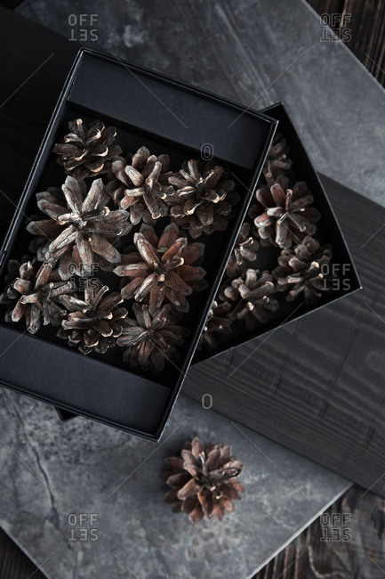 Fir cones in black boxes