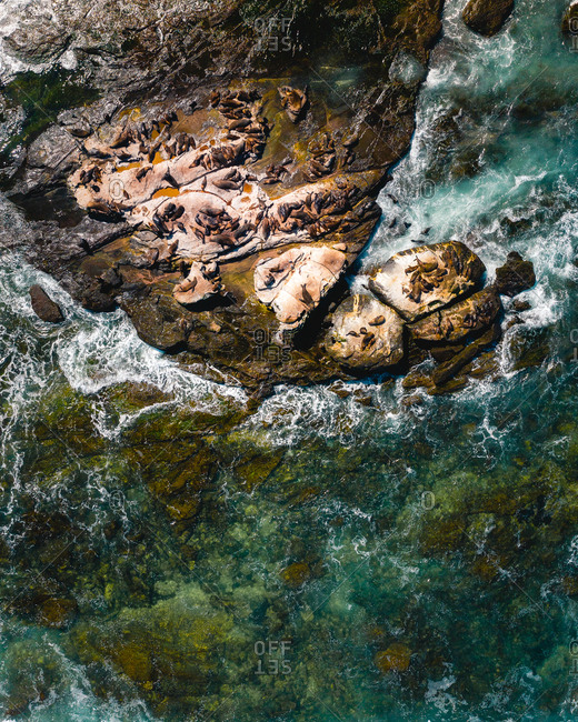 Aerial view of Seals on isolated rocks close to Great Ocean Road, Australia.