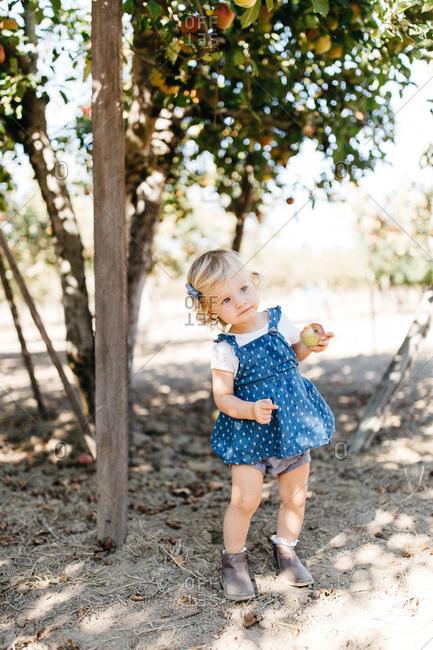 Little girl picking apples - Offset