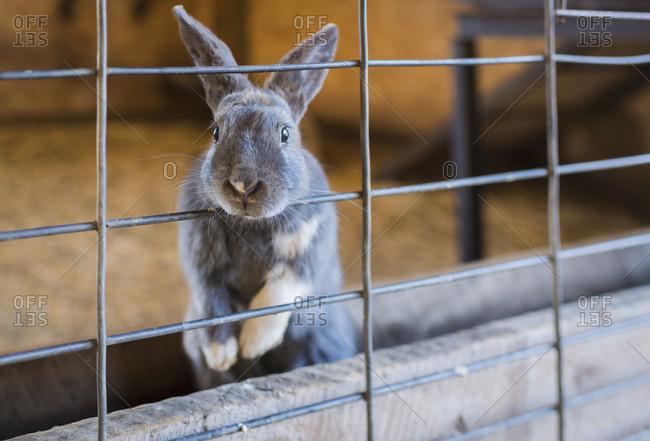Portrait of rabbit in cage