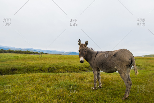 Donkey standing on field against clear sky