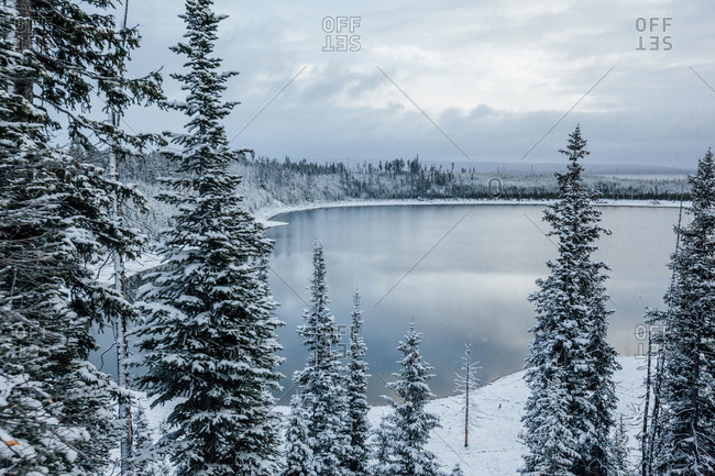 Scenic view of lake by frozen trees against cloudy sky
