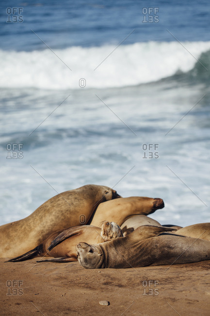 Sea lions relaxing on sand at beach