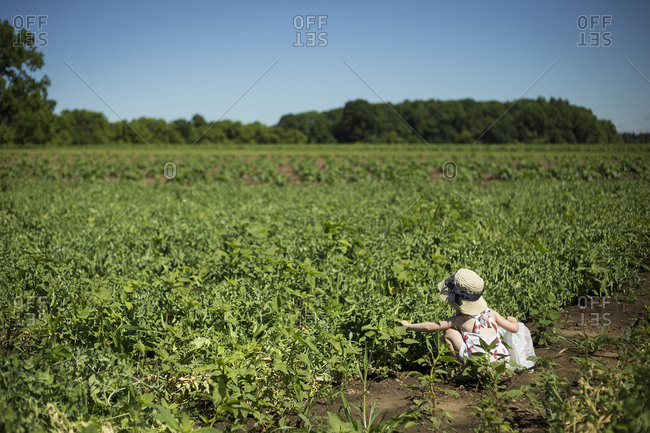 Girl in sun hat picking plants while crouching in farm against clear blue sky