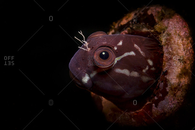Close-up of fish underwater against black background