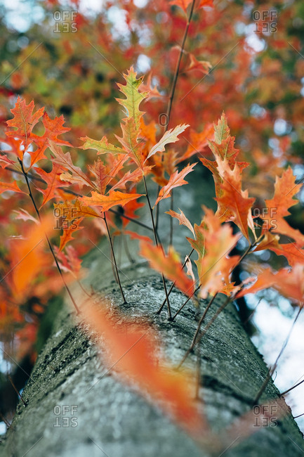 Low angle view of autumn leaves growing tree trunk